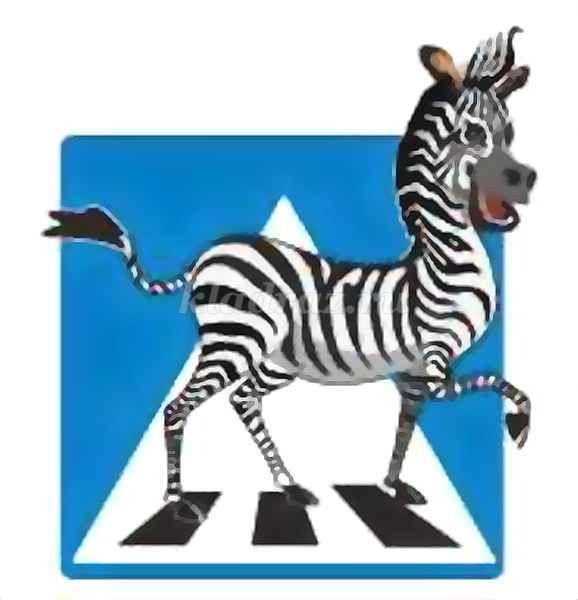 Зебра на дороге